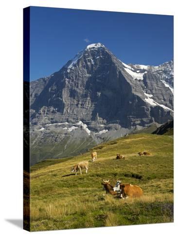 Switzerland, Bern Canton, Mannlichen Area, Swiss Cows , Background-Jamie And Judy Wild-Stretched Canvas Print