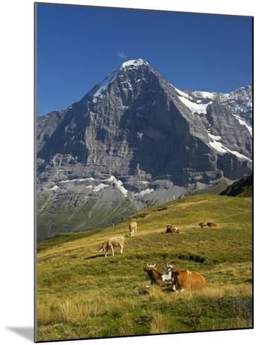 Switzerland, Bern Canton, Mannlichen Area, Swiss Cows , Background-Jamie And Judy Wild-Mounted Photographic Print