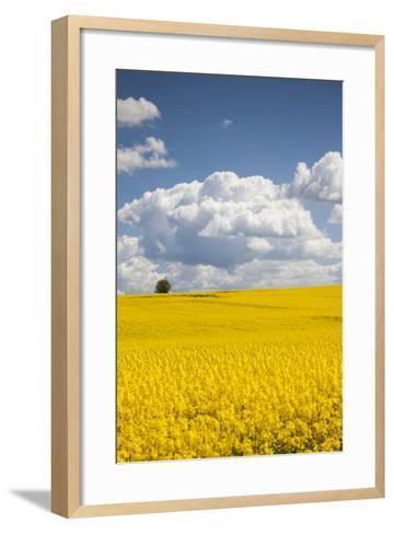 Denmark, Jutland, Odum, Rapeseed Field, Springtime-Walter Bibikow-Framed Art Print