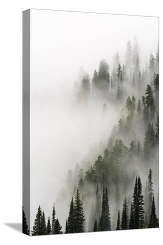 Cloud Forest, Glacier National Park, Montana-Russ Bishop-Stretched Canvas Print