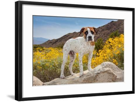 American Bulldog Puppy on Boulder Surrounded by Flowers-Zandria Muench Beraldo-Framed Art Print