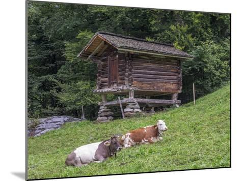 Switzerland, Bern Canton, Ballenberg, Dairy Cows and Cheese Storehouse-Jamie And Judy Wild-Mounted Photographic Print