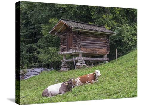 Switzerland, Bern Canton, Ballenberg, Dairy Cows and Cheese Storehouse-Jamie And Judy Wild-Stretched Canvas Print