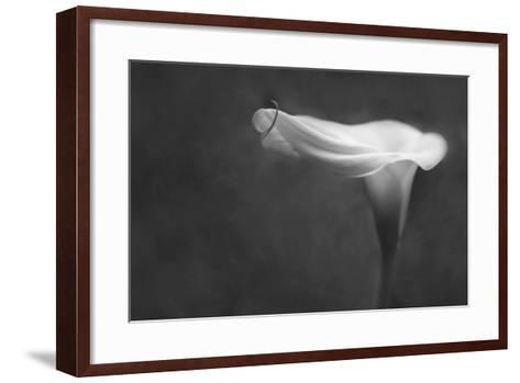 Pennsylvania. Calla Lily in Black and White-Jaynes Gallery-Framed Art Print