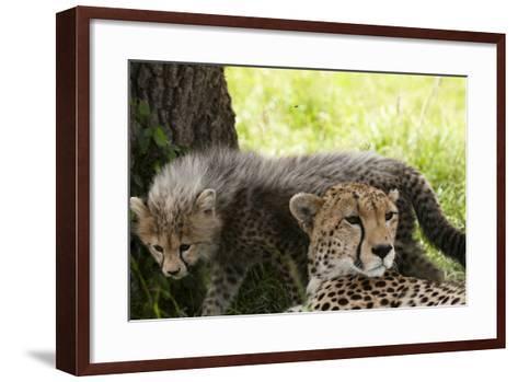 Cheetah and Cub, Masai Mara, Kenya-Sergio Pitamitz-Framed Art Print