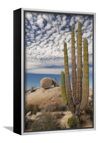 Mexico, Baja California, Cardon Cactus Surround Boulder Formations Near Catavina-Judith Zimmerman-Framed Canvas Print