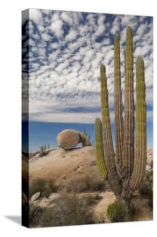 Mexico, Baja California, Cardon Cactus Surround Boulder Formations Near Catavina-Judith Zimmerman-Stretched Canvas Print