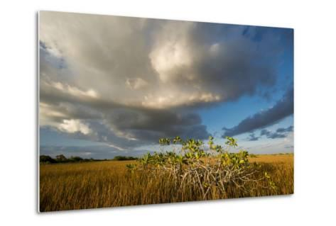 Florida. Sunset on Red Mangroves in Everglades National Park-Judith Zimmerman-Metal Print