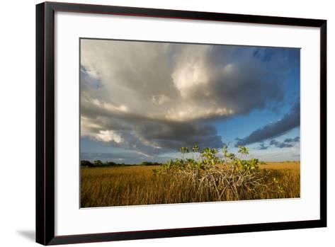 Florida. Sunset on Red Mangroves in Everglades National Park-Judith Zimmerman-Framed Art Print