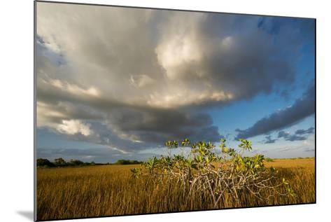Florida. Sunset on Red Mangroves in Everglades National Park-Judith Zimmerman-Mounted Photographic Print