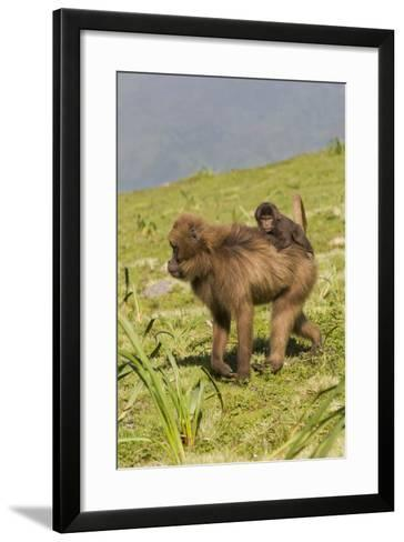 Africa, Ethiopian Highlands, Western Amhara, Simien Mountains National Park-Ellen Goff-Framed Art Print