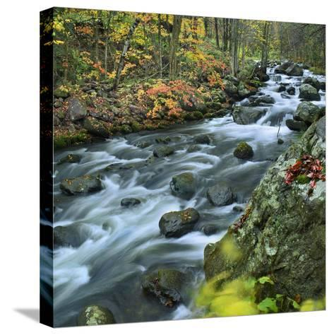 Stream Flowing Through Lake George Wild Forest, New York-Tim Fitzharris-Stretched Canvas Print