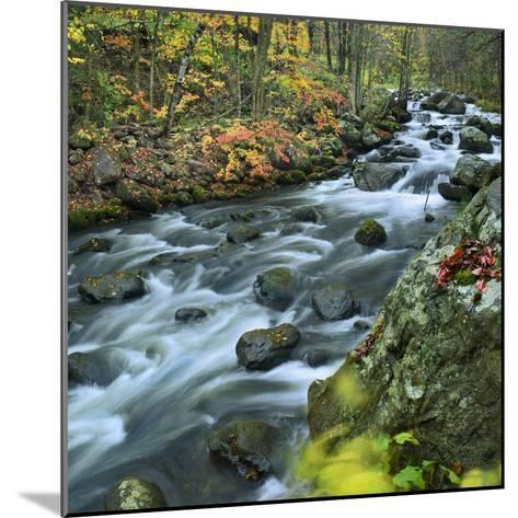 Stream Flowing Through Lake George Wild Forest, New York-Tim Fitzharris-Mounted Photographic Print