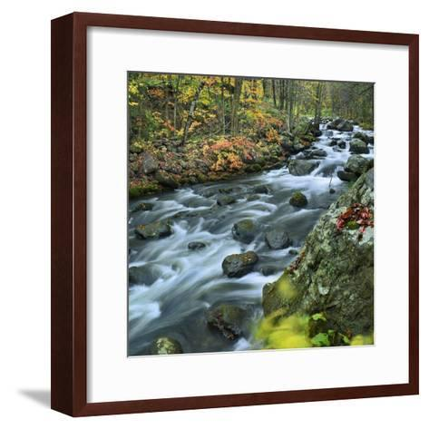 Stream Flowing Through Lake George Wild Forest, New York-Tim Fitzharris-Framed Art Print