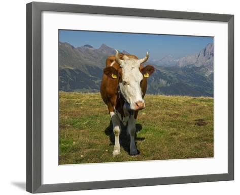 Switzerland, Bern Canton, Mannlichen Area, Swiss Cow in Alpine Setting-Jamie And Judy Wild-Framed Art Print
