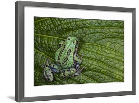 San Lucas Marsupial Frog, Andes, Ecuador-Pete Oxford-Framed Art Print