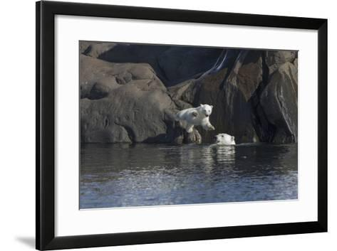Norway, Svalbard, Polar Bear and Cub Coming Off Rocks to the Ocean-Ellen Goff-Framed Art Print