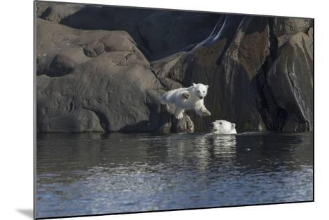 Norway, Svalbard, Polar Bear and Cub Coming Off Rocks to the Ocean-Ellen Goff-Mounted Photographic Print