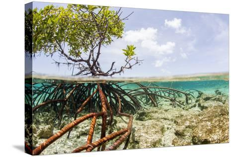 Over and under Water Photograph of a Mangrove Tree , Background Near Staniel Cay, Bahamas-James White-Stretched Canvas Print