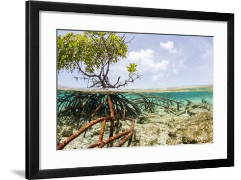 Over and under Water Photograph of a Mangrove Tree , Background Near Staniel Cay, Bahamas-James White-Framed Art Print
