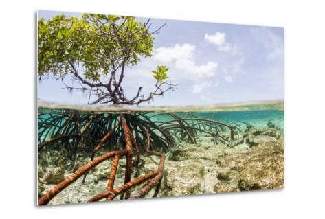 Over and under Water Photograph of a Mangrove Tree , Background Near Staniel Cay, Bahamas-James White-Metal Print