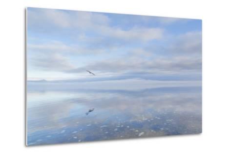 Washington State, Hood Canal. Winter Sunrise Mirrored in Hood Canal-Jaynes Gallery-Metal Print