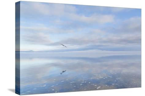 Washington State, Hood Canal. Winter Sunrise Mirrored in Hood Canal-Jaynes Gallery-Stretched Canvas Print