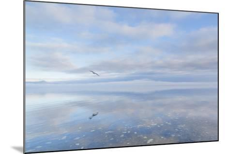 Washington State, Hood Canal. Winter Sunrise Mirrored in Hood Canal-Jaynes Gallery-Mounted Photographic Print
