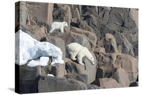 Norway, Svalbard, Polar Bear and Cub Coming Off Rocks to the Ocean-Ellen Goff-Stretched Canvas Print