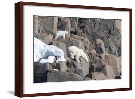 Norway, Svalbard, Polar Bear and Cub Coming Off Rocks to the Ocean-Ellen Goff-Framed Art Print