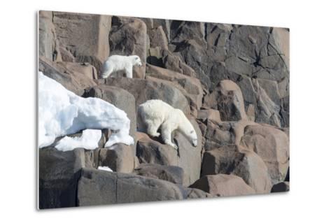 Norway, Svalbard, Polar Bear and Cub Coming Off Rocks to the Ocean-Ellen Goff-Metal Print