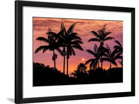 Sunset Through Silhouetted Palm Trees, Kona Coast, the Big Island, Hawaii-Russ Bishop-Framed Art Print