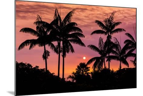 Sunset Through Silhouetted Palm Trees, Kona Coast, the Big Island, Hawaii-Russ Bishop-Mounted Photographic Print