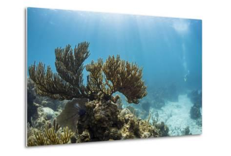 Soft Coral Sea Fans are Seen in This Underwater Photograph Taken Off the Isle of Youth, Cuba-James White-Metal Print