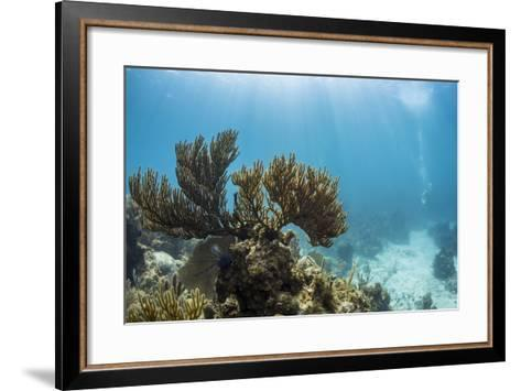 Soft Coral Sea Fans are Seen in This Underwater Photograph Taken Off the Isle of Youth, Cuba-James White-Framed Art Print