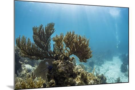 Soft Coral Sea Fans are Seen in This Underwater Photograph Taken Off the Isle of Youth, Cuba-James White-Mounted Photographic Print
