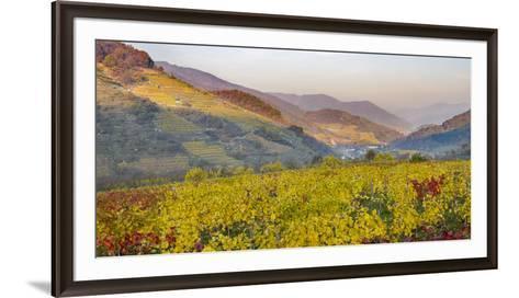 Village Spitz Nested in the Vineyards of the Wachau. Austria-Martin Zwick-Framed Art Print