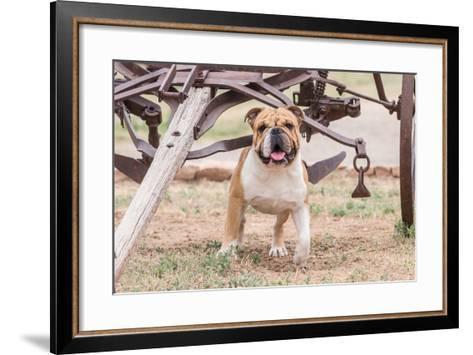 Bulldog Standing under Old Wagon-Zandria Muench Beraldo-Framed Art Print