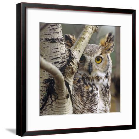Great Horned Owl Pale From, British Columbia, Canada-Tim Fitzharris-Framed Art Print