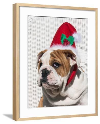 Bulldog Puppy with Christmas Hat on-Zandria Muench Beraldo-Framed Art Print