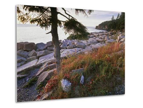 Otter Point from Thunder Hole, Acadia National Park, Maine-Tim Fitzharris-Metal Print