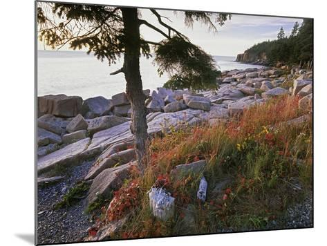 Otter Point from Thunder Hole, Acadia National Park, Maine-Tim Fitzharris-Mounted Photographic Print