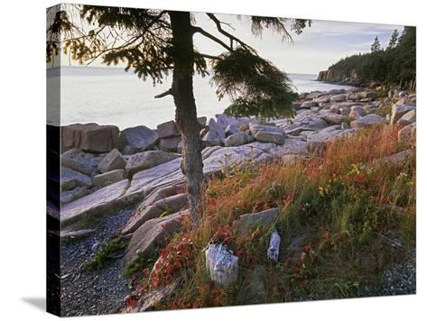 Otter Point from Thunder Hole, Acadia National Park, Maine-Tim Fitzharris-Stretched Canvas Print