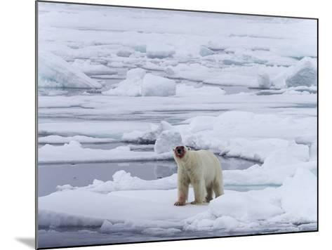 Arctic Ocean, Norway, Svalbard. Polar Bear after Eating-Jaynes Gallery-Mounted Photographic Print
