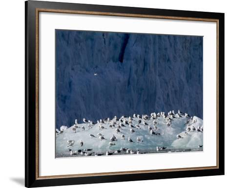 Arctic Ocean, Norway, Svalbard. Kittiwake Birds on Iceberg-Jaynes Gallery-Framed Art Print