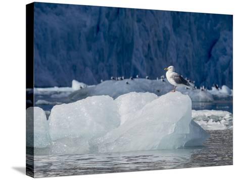 Arctic Ocean, Norway, Svalbard. Kittiwake Bird on Iceberg-Jaynes Gallery-Stretched Canvas Print