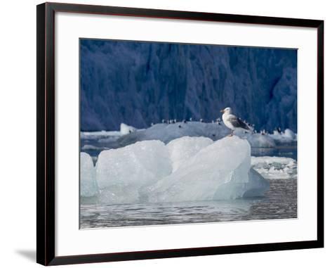 Arctic Ocean, Norway, Svalbard. Kittiwake Bird on Iceberg-Jaynes Gallery-Framed Art Print