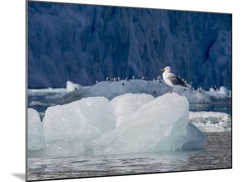 Arctic Ocean, Norway, Svalbard. Kittiwake Bird on Iceberg-Jaynes Gallery-Mounted Photographic Print