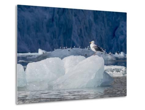 Arctic Ocean, Norway, Svalbard. Kittiwake Bird on Iceberg-Jaynes Gallery-Metal Print