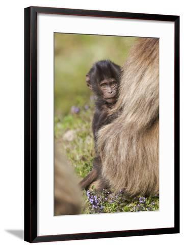 Africa, Ethiopia, Ethiopian Highlands, Western Amhara, Simien Mountains National Park-Ellen Goff-Framed Art Print